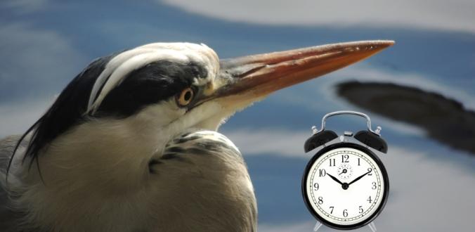 vroegevogel